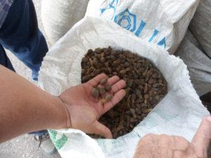 Fotografía de Hans Van der Wal en Flickr con un saco de semillas de palma africana